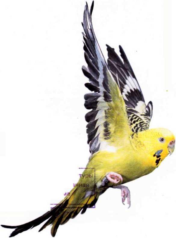 Волнистые попугайчики - image3.jpg