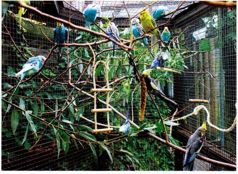 Волнистые попугайчики - image8.jpg