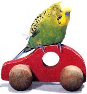 Волнистые попугайчики - image9.jpg