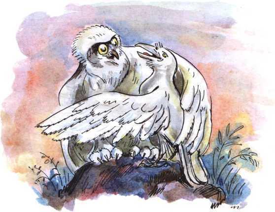 О честном вороне, коварной сове и глупом лисе<br />(Эскимосские сказки) - i_003.jpg