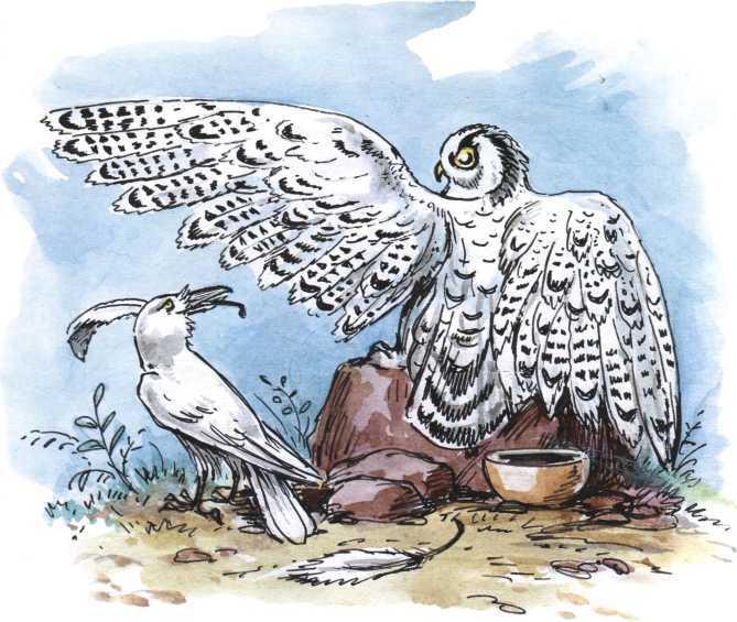 О честном вороне, коварной сове и глупом лисе<br />(Эскимосские сказки) - i_006.jpg