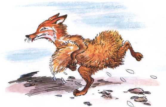 О честном вороне, коварной сове и глупом лисе<br />(Эскимосские сказки) - i_017.jpg